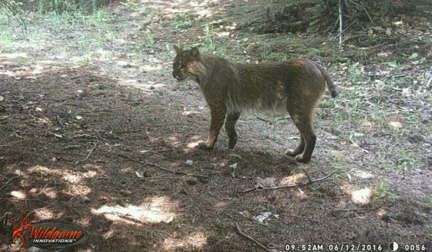 How Much Does a Cellular Trail Camera Plan Cost - Trail Cam