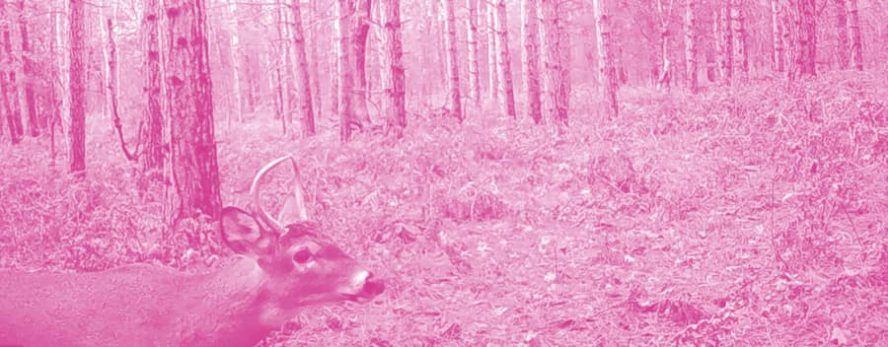 Why Your Trail Camera Takes Pink Photos and How To Fix It - Trail
