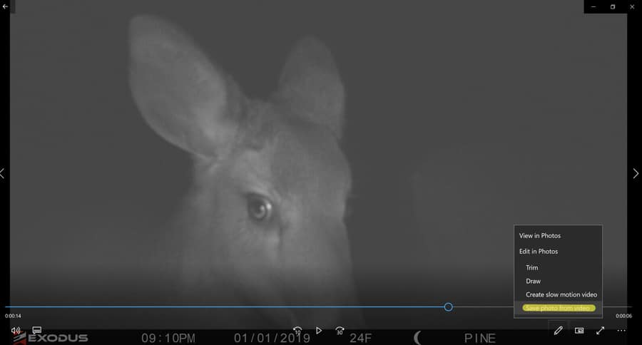 Extract a Photo From A Trail Camera Video: A Helpful